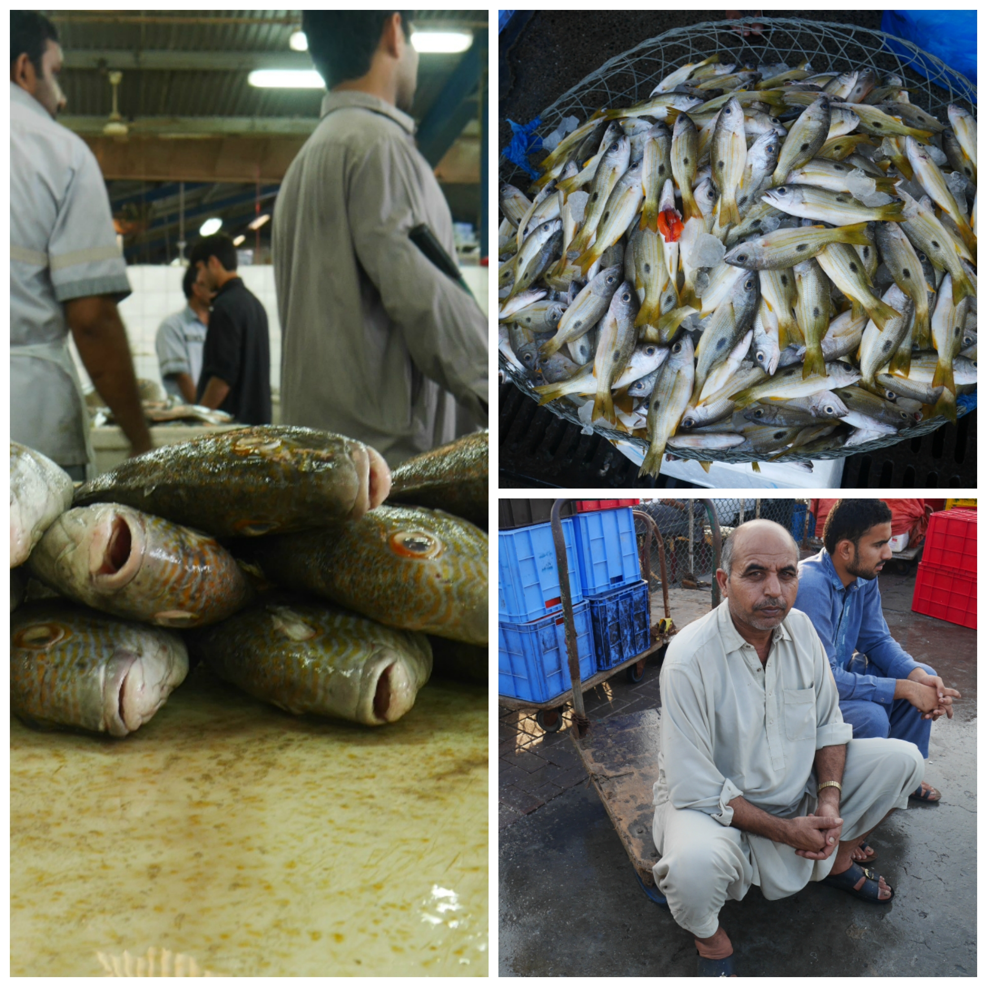2016-dubai-fish-markets-collage