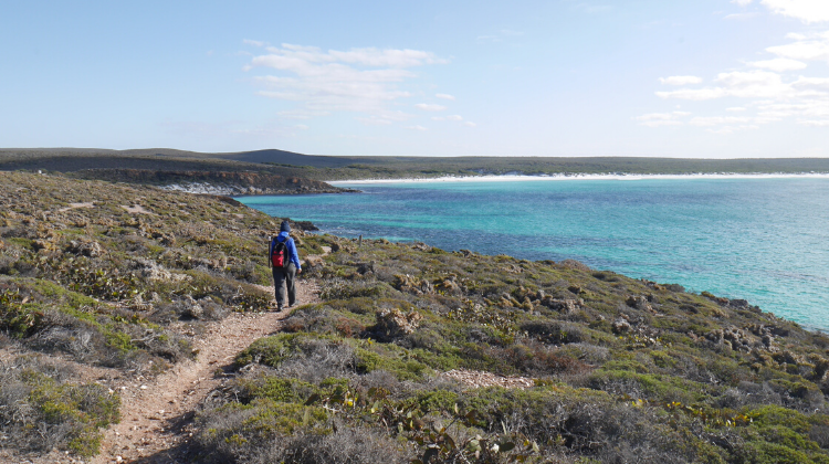 Hiking trail in the Fitzgerald National Park