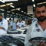 Snapshot:  Dubai Fish Markets